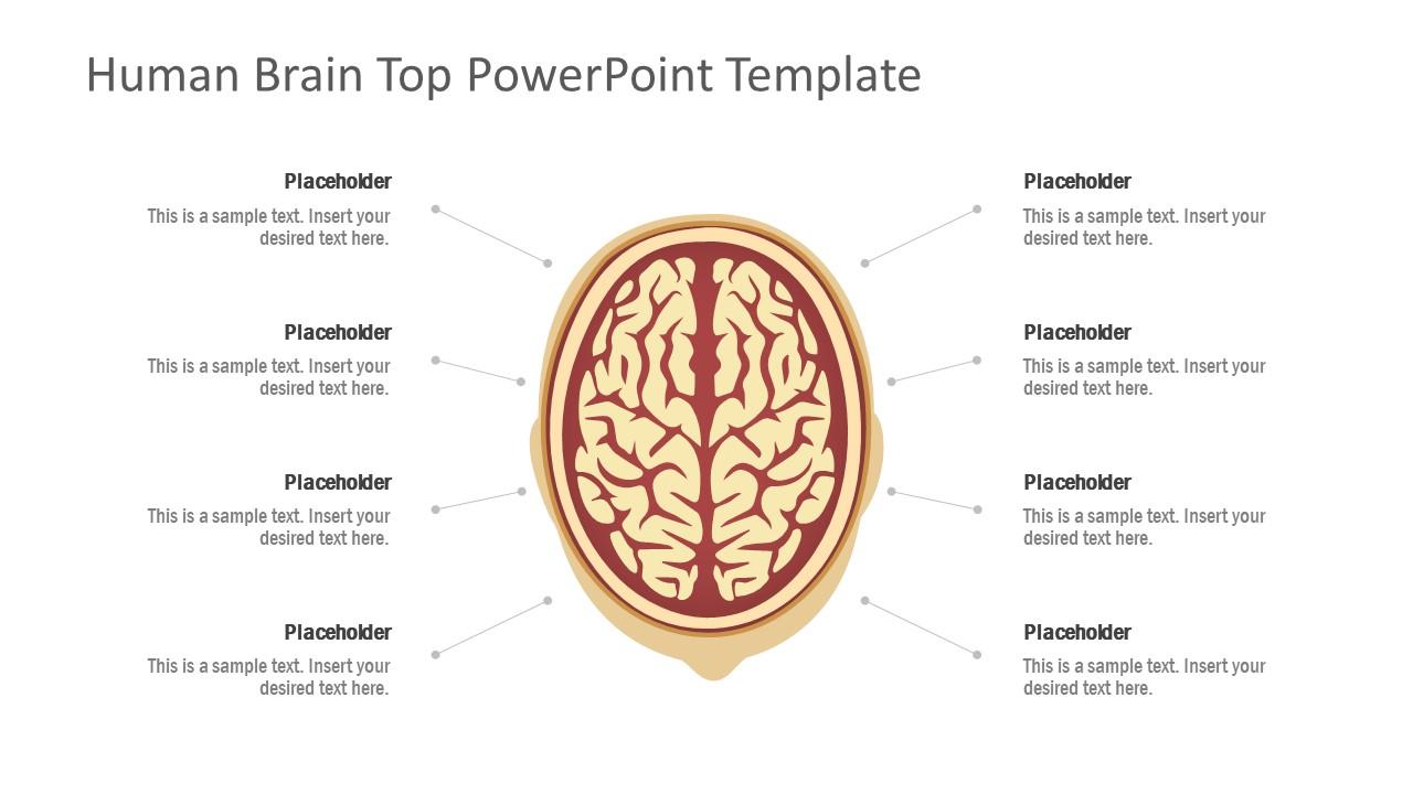 Human Brain Diagram Template - SlideModel