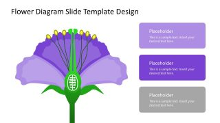 Flower Anatomy PowerPoint Diagram Slide