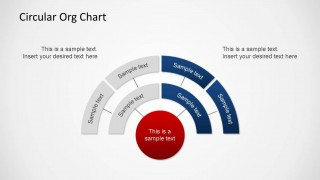 Circular Org Chart PowerPoint Diagram