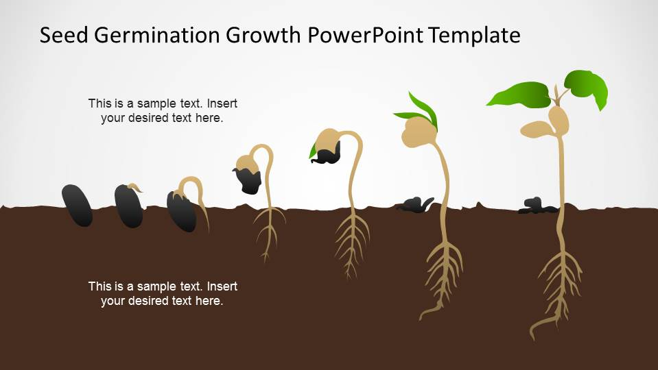 seed germination growth powerpoint template