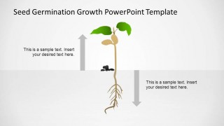 Small Plant PowerPoint Shape after Germination Process Timeline