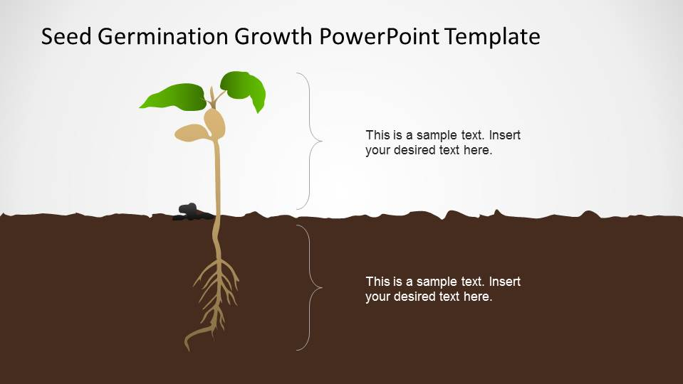 Seed germination growth powerpoint template slidemodel plant seen vertically with roots under ground and stem above ground toneelgroepblik