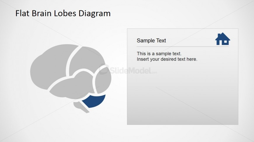 Flat Cerebellum Brain Lobe Cross Sectional Diagram with Icons