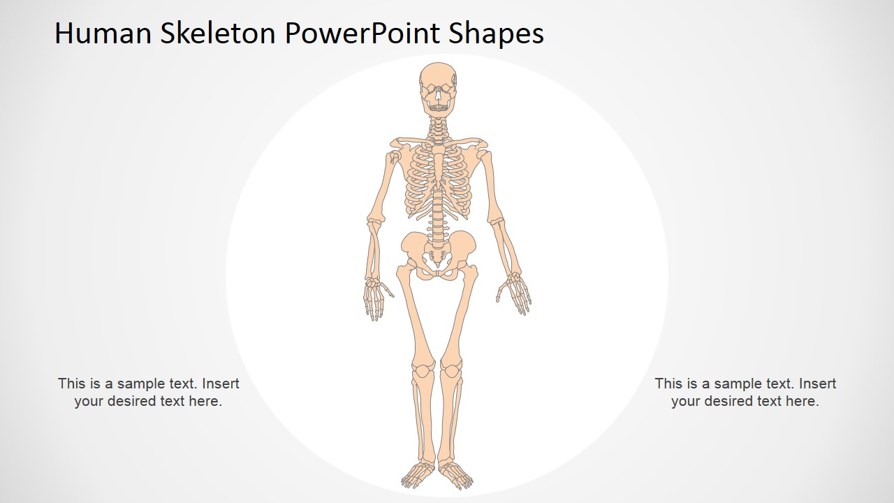 human skeleton powerpoint shapes slidemodel