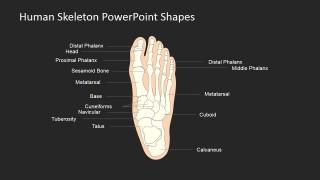 Human Body Skeleton Template