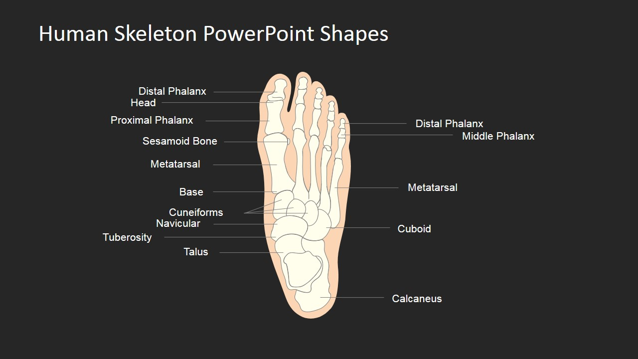 human skeleton powerpoint shapes
