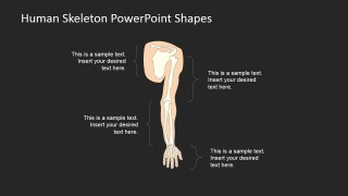 PowerPoint Slides for Human Anatomy