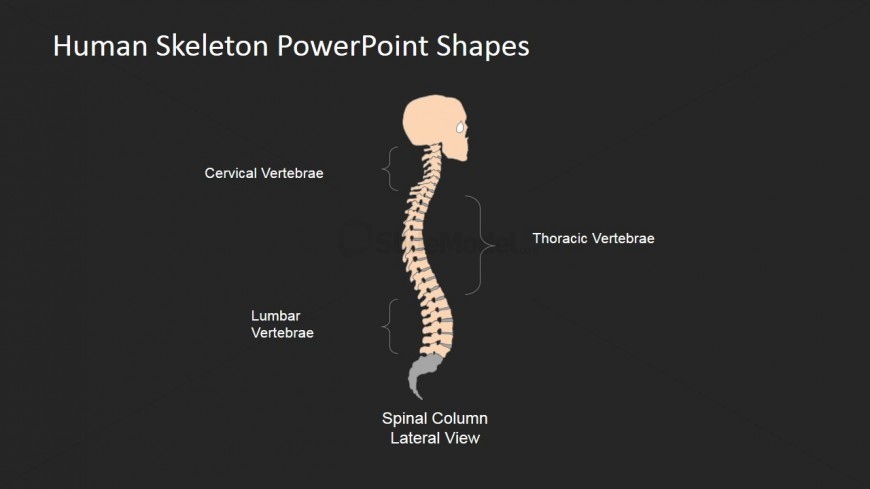 Online PowerPoint Templates for Medical Presentations