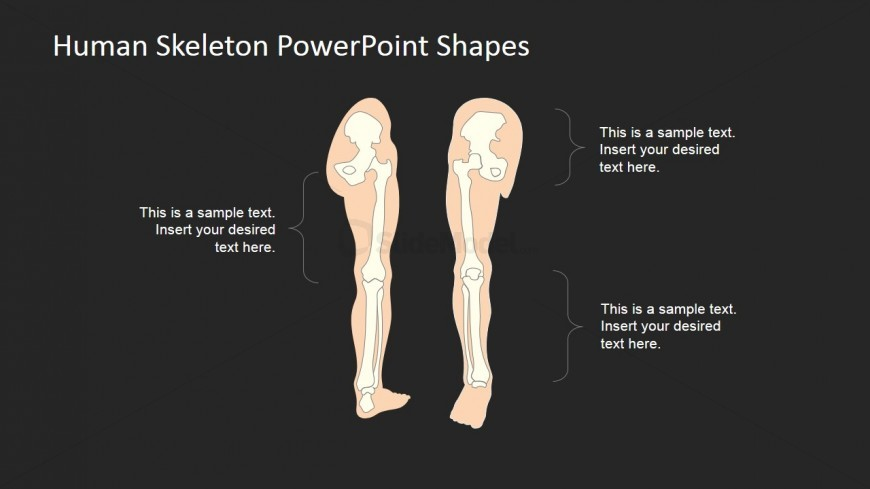 PowerPoint Picture of Human Skeleton
