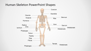 Anatomy and Physiology Presentation in PowerPoint