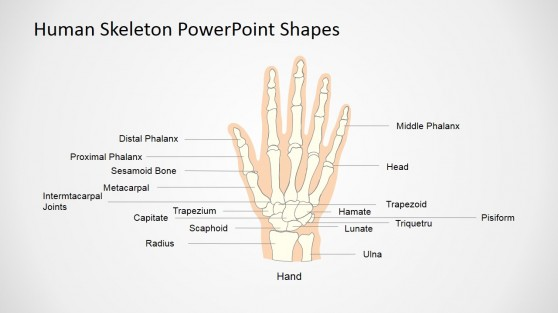 Human Skeleton Presentation Template (Hand)