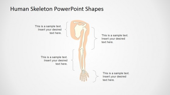 The Human Skeleton Presentation Template (Upper Extremity)