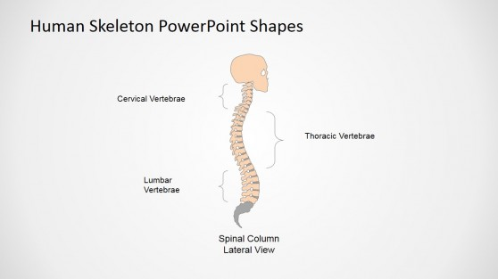 Medical Presentation Using PowerPoint (Spinal Column Lateral View)