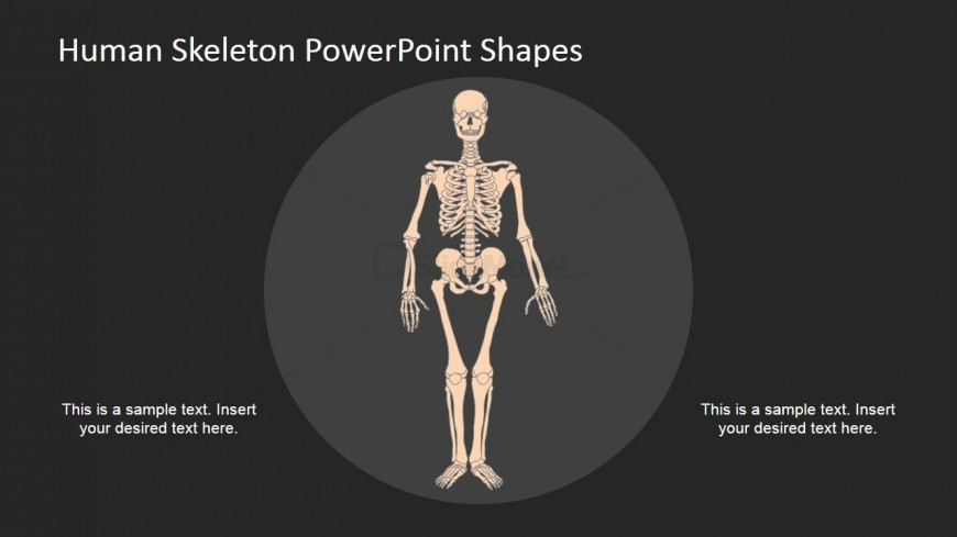Human Skeleton Diagram Using PowerPoint