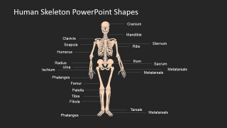Template Designs for Human Skeleton