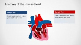 Human Organ PowerPoint Template
