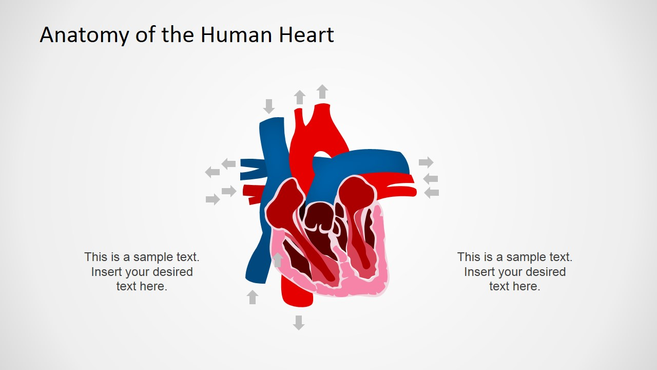 circulatory system powerpoint design - slidemodel, Modern powerpoint
