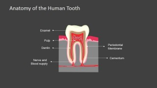 PowerPoint Slide Dark Background Human Tooth Anatomy