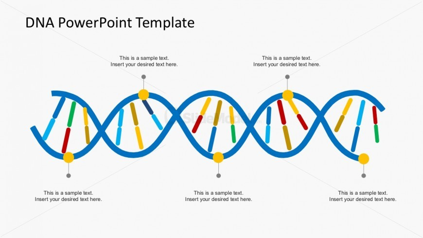 Organizational DNA Strands PowerPoint Templates