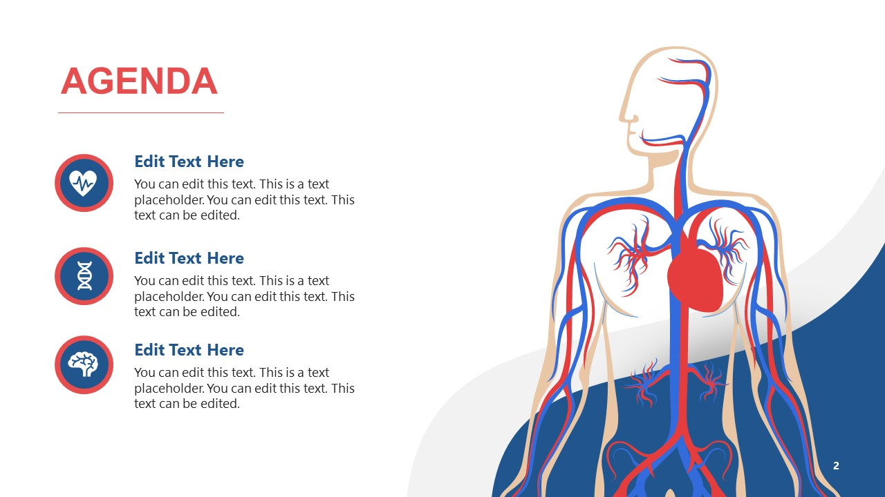PowerPoint Agenda Templates for Circulatory System
