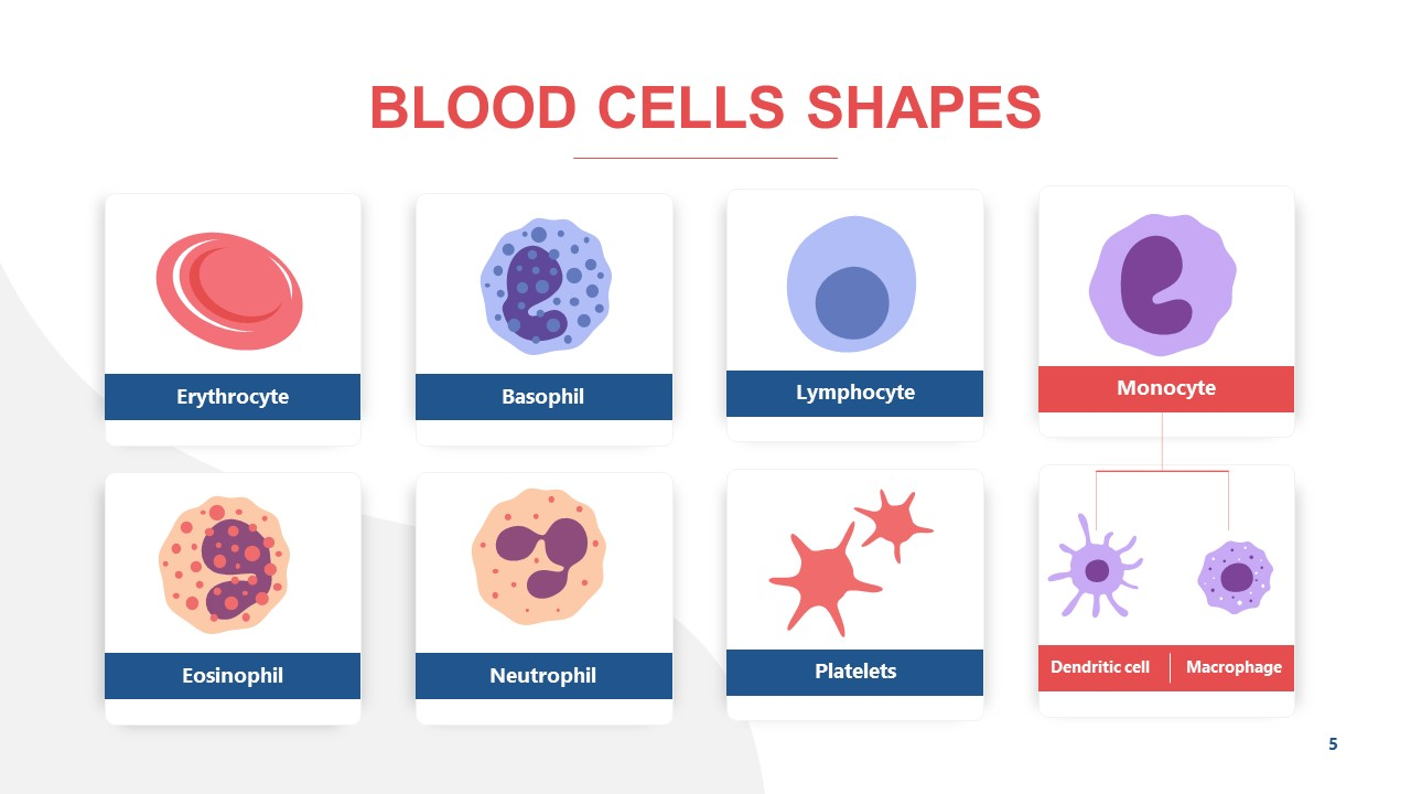 Vector Illustration of Blood Cells