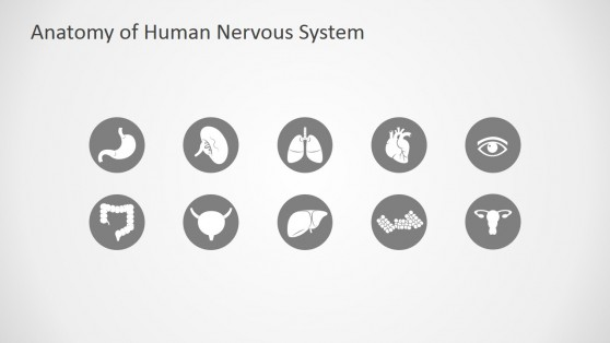Human Anatomy PowerPoint Icons