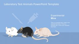 Rat Animal Experimentation PowerPoint