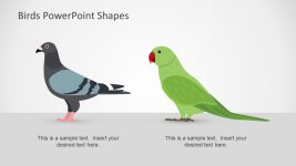 Pigeon and Green Parrot