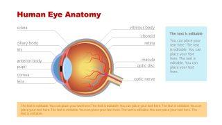 Label Diagram for Eye Anatomy PPT
