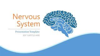 Presentation Design for Nervous System