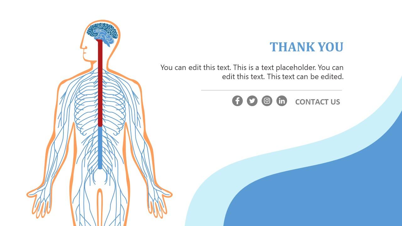 PPT Human Nervous System Template Design